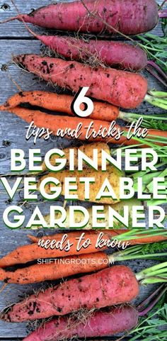 While you're learning how to grow your new vegetable garden, there's a few truths and tips every beginner should know. Hint: you need to water and weed, and you'll probably pull out a few good plants along the way. #gardening #vegetablegardening #beginnergardener #gardentips