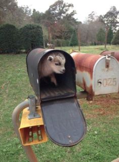 You've goat mail!