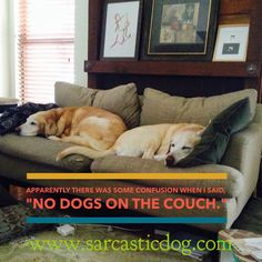 Simon & Zora must have missed the memo... Dog Humor | Funny Dogs | Dog Memes | Sarcastic Dog | Dog Lovers |