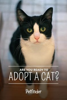Can't stop thinking about adopting a cat? Cats make amazing pets, but there are a few things to take into consideration before bringing a cat home. Read Petfinder's adoption checklist before committing.