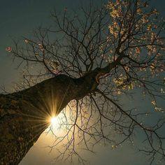 Günaydın Doğa  #günaydın #goodmorning #gunaydin #bonjour #sunshine #şükür #grateful #innerjourney #nefes #love #wakeup #tugrulcavusoglu #livesimply #lovelife #namaste #lovenature #nature #doğa #positivevibes #energy #innerjourney #positiveenergy #love #sevgi #meaning #life #letgo #letbe