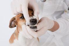 PEDRO HITOMI OSERA: Campanha de Saúde Bucal de Pets é realizada neste ...