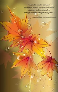 New The Most Beautiful Fall Season Wallpaper for iPhone XS Max – Wallapapers for iPhone Flower Phone Wallpaper, Fall Wallpaper, Butterfly Wallpaper, Cellphone Wallpaper, Colorful Wallpaper, Galaxy Wallpaper, Iphone Wallpaper, Beautiful Flowers Wallpapers, Beautiful Nature Wallpaper