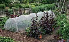Schutznetze wehren im Gemüsebeet verschiedene Schädlinge ab