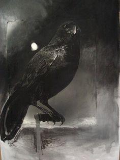 Classic raven....
