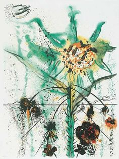"Two Exquisite Flowers ""Sun Goddess Flower"" - Art Gallery - Salvador Dali Society"