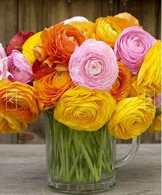 This ranunculus bouquet knocks me flat. One of my favorite flowers. My Flower, Fresh Flowers, Beautiful Flowers, Cactus Flower, Exotic Flowers, Purple Flowers, Colorful Roses, Bright Flowers, Paper Flowers