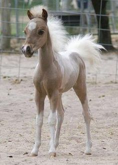 OK, if you don't think that's cute... It is cute! It looks to be a palimino foal, mabey of a miniture horse or pony of some sort, i am to cutified to think!