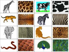 Identify which animal each of the skin patterns be by - teaching resources - tes Animal Activities, Montessori Activities, Preschool Activities, Zoo Crafts, Animal Crafts, Zoo Preschool, Preschool Crafts, Animal Coverings, Musical Rey Leon