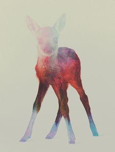 animal-kingdom-andreas-lie-11