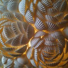 Shells :)