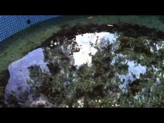 Aquaponics - Blue crabs and salinity - YouTube