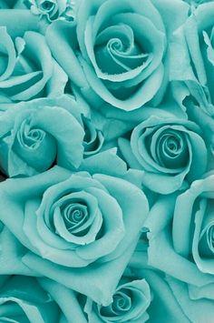 Aqua Bleu Tiffany, Verde Tiffany, Tiffany Green, Tiffany Rose, Shades Of Turquoise, Shades Of Blue, Aqua Blue, Turquoise Flowers, Mint Green