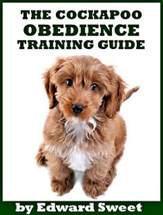 The Cockapoo Obedience Training Guide: FREE EBOOK | Cockapoo Crazy | All About Cockapoos