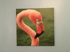 Flamingo Flamingo, Birds, Animals, Animales, Animaux, Animal, Animais