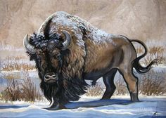 American Bison Winter by HouseofChabrier on DeviantArt Buffalo Animal, Buffalo Art, Buffalo Ranch, Native American Pictures, Native American Artwork, Buffalo Pictures, Bison Tattoo, Buffalo Tattoo, Buffalo Painting