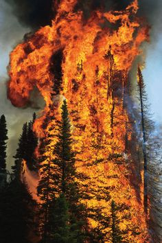 "themanalive: "" wood-is-good: Forest Fire (by Opticoverload) "" Awesome power and beauty in nature! Mother Earth, Mother Nature, Wow Photo, Fire Photography, Wildland Firefighter, Wild Fire, Into The Fire, All Nature, Landscape Photography"