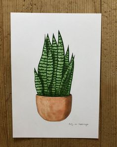 Sansevieria drawing ✍🏻