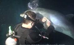 Dolphin Tangled in Fishing Line Approaches Divers for Help (Video)