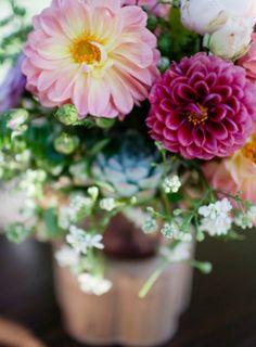 syflove:   dahlias - Fruity and Belle