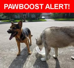 Is this your lost pet? Found in Humble, TX 77346. Please spread the word so we can find the owner!  Looks like a husky and German shepherd mix.  Both stay together. I have them safe in back yard no collars tags or chips  Near Powerscourt Dr & Firesign Dr