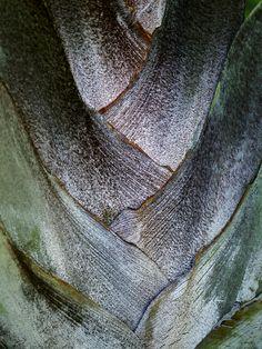 Karin Meyn | Palm tree leaf.