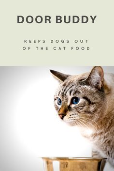 If your dog is constantly eating the cat food and you are looking for an easier way to keep your dog out, then you need Door Buddy. The perfect solution for easy cat and human access to room with cat food while keeping dogs out. Check it out at TheDoorBuddy.com. :)