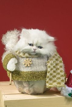 Oh, Grandma, you knitted me a holiday sweater/scarf set.  Thank you, you shouldn't have.  Really.