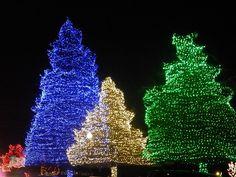 Saluda Shoals Christmas Lights