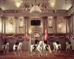 Spanish Riding School in Vienna.  My biggest dream is to visit Vienna a witness a performance of my beloved Lipizzaners.