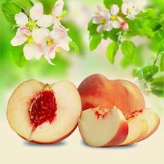 White Peach and Silk Blossoms Fragrance Oil  #naturesgarden #candlemakingsupplies #fragranceoil #soapmakingsupplies
