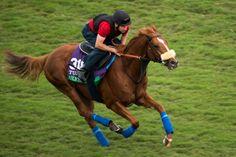 Ulysses Cavallo da corsa di razza purosangue inglese, campione nel Regno Unito nato il 20 marzo 2013. Generato daGalileo eLight Shift. Ulysses fu allevat