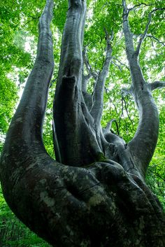 """""""Shirakami-Sanchi #japan #aomori#World Heritage"""" - I've always loved the freestyle growth of trees as it is not always what you would expect ~:^)>"""