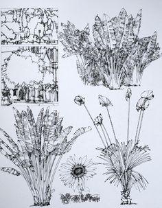 钢笔手绘巴黎建筑-------建筑植物配景12        陈新生作品