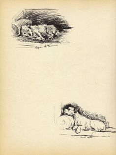 CUTE POOCH Dog Print 1930s Lucy Dawson Pet portrait by BookStyles