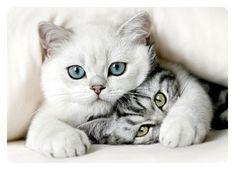 귀여운 고양이 사진 - 희귀고양이 편 [성격 종류外] : 네이버 블로그