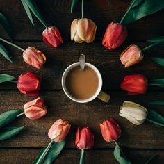 Coffee cup with creative arrangement of tulips on wooden background by zamurovic. Coffee cup with creative arrangement of tulips on dark wooden background. But First Coffee, My Coffee, Morning Coffee, Coffee Time, Coffee Cups, Funny Coffee, Flat Lay Photography, Coffee Photography, Food Photography
