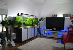 Картинки по запросу дизайнерские аквариумы