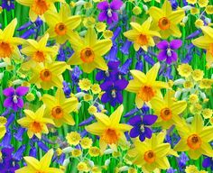 Spring Flowers Backgrounds | Free Background Seamless Repeating ...