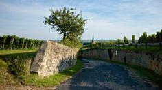 Weinberge von Deidesheim