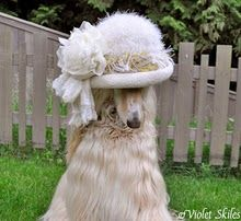 Love Afghan Hounds!  And the hat is perfect!