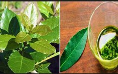 High Blood Pressure, Sciatica, A Blessing, Home Remedies, Spinach, Plant Leaves, Herbs, Cancer, Wellness