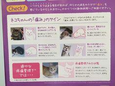 動物病院でこんなポスターがあった。   猫の「痛み」のサイン。 一つでも当てはまる項目があれば、何らかの病気やケガで「痛み」を感じているかもしれません。 かかりつけの動物病院へご相談ください。