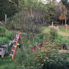 Pruning morning... taking the lid off the #hawthorntrees #thorn is the key word..... painful beauty 🍁🍂🌿🌳🌿✂️✂️✂️