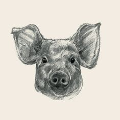animal photo collection for Animal + All Animals Photos, Animals Images, Animal Pictures, Paw Patrol Birthday, Animal Birthday, Animal Cards, Animal Drawings, Stuffed Animals, Moose Art