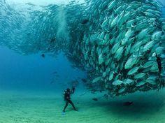 Cardumen en el Mar de Cortez. Google