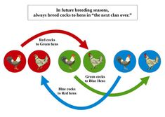 Using the Clan Mating System Low-Input Breeding for Maximum Genetic Diversity in Small Flocks