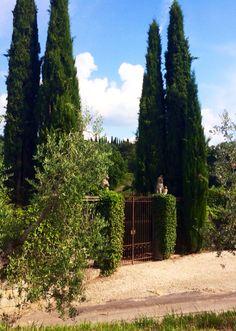 Tenuta San Fabiano, Arezzo [property of Carlotta Andrea Buracchi]