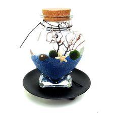 Marimo moss ball babies in ocean blue heart by EclecticZen on Etsy, $25.00