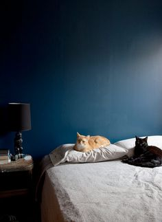 Blue + cats. Photo by Lesley Unruh